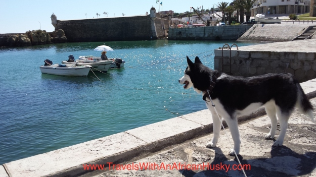 Amy, the African Husky, near the old fort in Lagos, Portugal on a beautiful sunny day in March.
