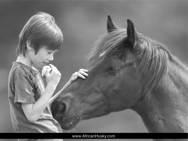 Thomas and the Horse, www.AfricanHusky.com